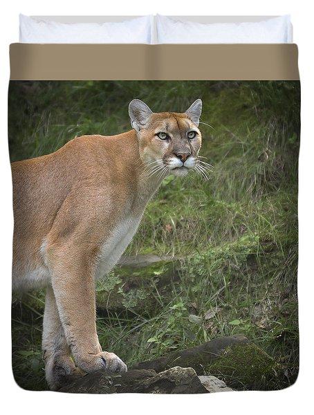 Mountain Lion Duvet Cover