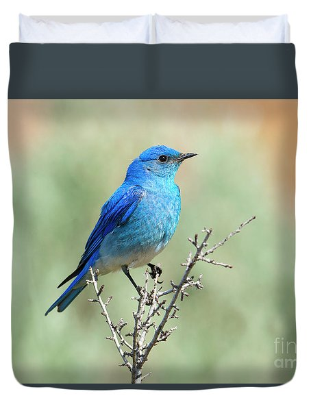 Mountain Bluebird Beauty Duvet Cover