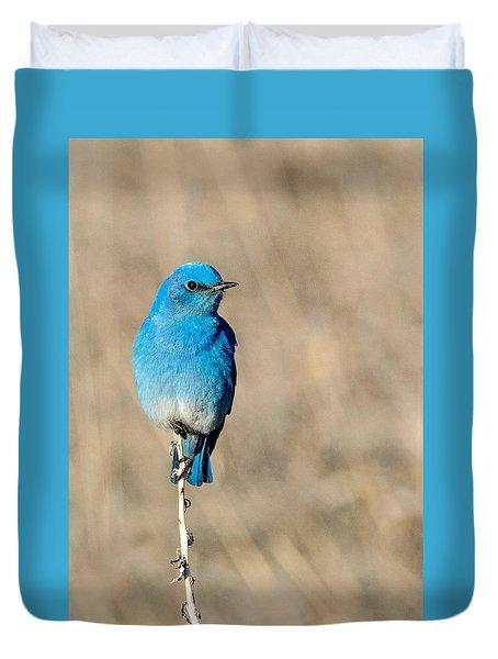 Mountain Bluebird On A Stem. Duvet Cover