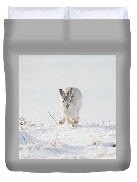 Mountain Hare Approaching Duvet Cover