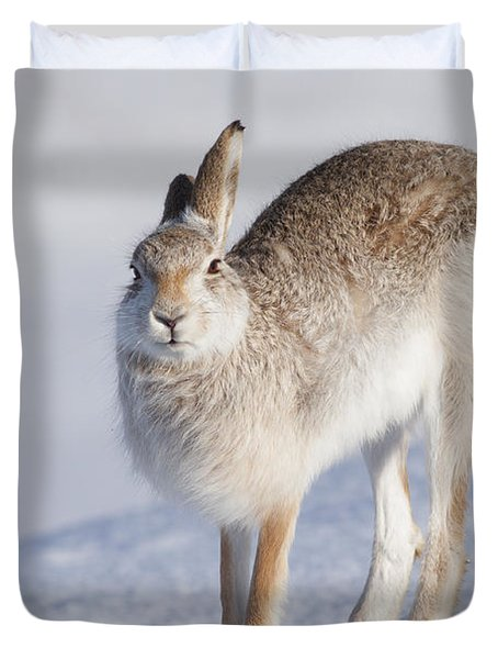 Mountain Hare In The Snow - Lepus Timidus  #2 Duvet Cover