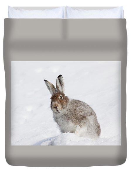 Mountain Hare In Winter Duvet Cover