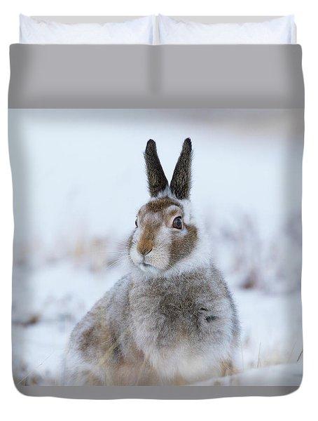 Mountain Hare - Scotland Duvet Cover