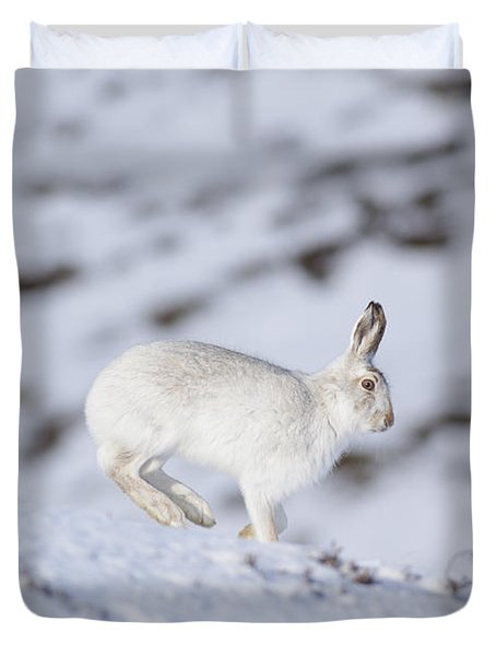 Mountain Hare - Scottish Highlands  #12 Duvet Cover