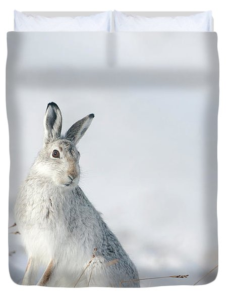 Mountain Hare Sitting In Snow Duvet Cover