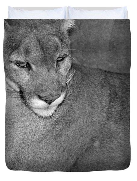 Mountain Lion - Sonoran Desert Museum  Duvet Cover by Donna Greene