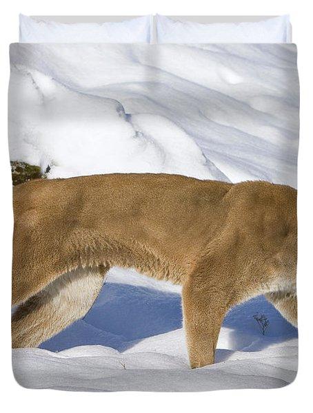Mountain Lion Puma Concolor Hunting Duvet Cover by Matthias Breiter