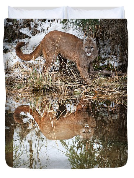 Mountain Lion Reflection Duvet Cover