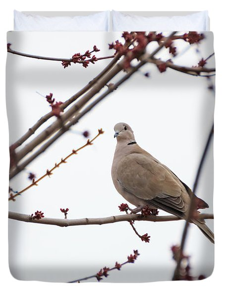 Mourning Dove At Rest Duvet Cover