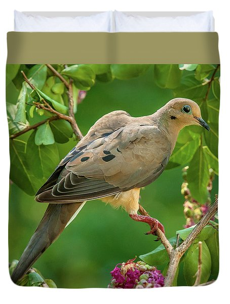 Mourning Dove In Crepe Myrtle Duvet Cover