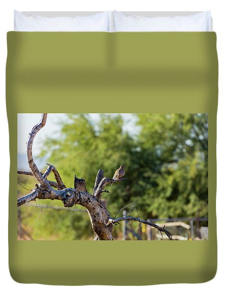 Mourning Dove In Old Tree Duvet Cover