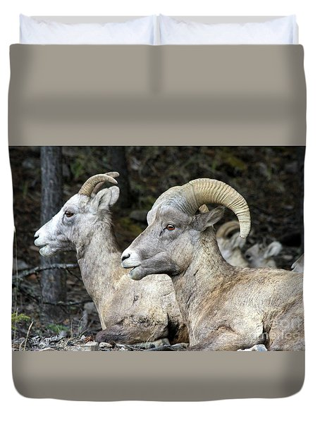 Mt Sheep  Duvet Cover