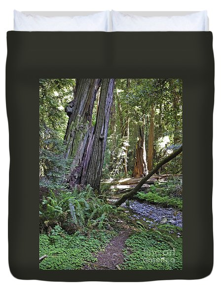 Muir Woods Beauty Duvet Cover