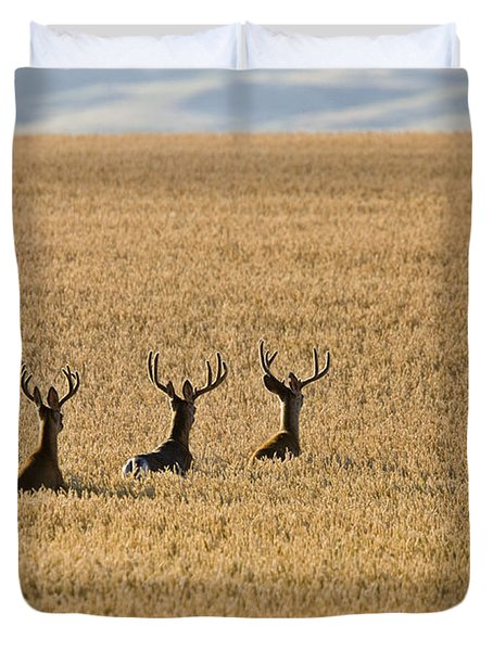 Mule Deer In Wheat Field Duvet Cover