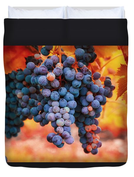 Multicolored Grapes Duvet Cover by Lynn Hopwood