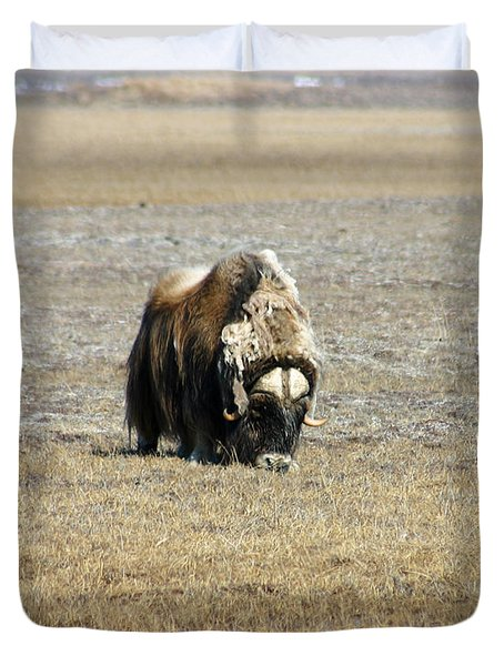 Musk Ox Grazing Duvet Cover by Anthony Jones