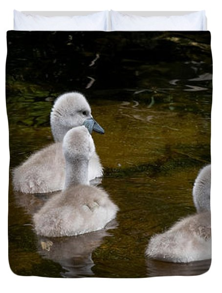 Mute Swan Babes Duvet Cover