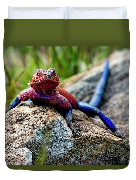 Mwanza Flat-headed Rock Agama Duvet Cover