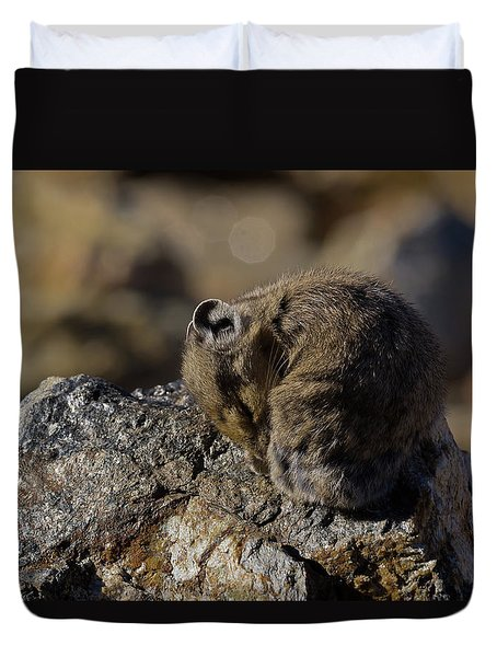 Napping American Pika - 4694 Duvet Cover