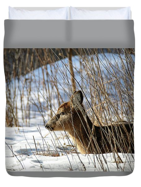 Napping Fawn Duvet Cover by Brook Burling