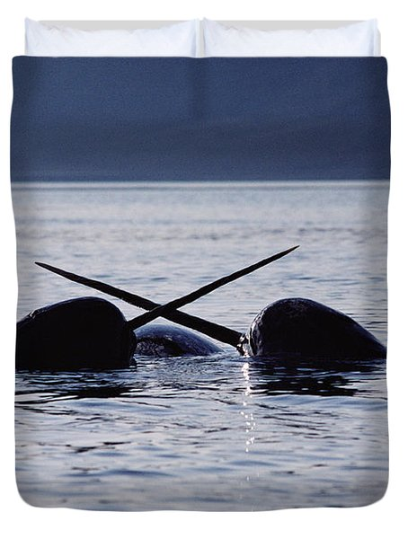 Narwhal Males Sparring Baffin Island Duvet Cover