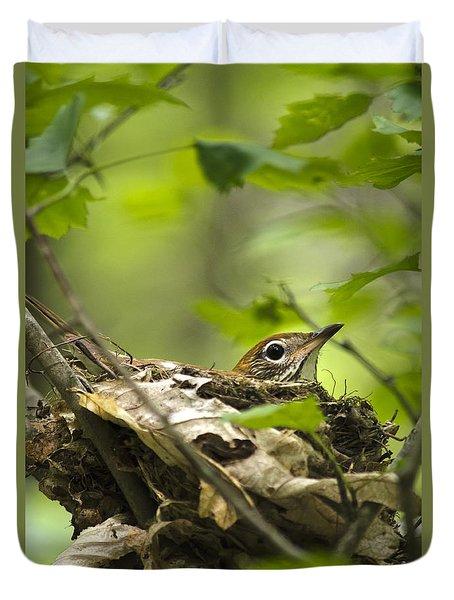 Nesting Birds - Wood Thrush Duvet Cover by Christina Rollo