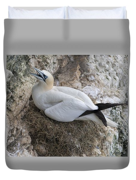Nesting Gannett  Duvet Cover by David  Hollingworth