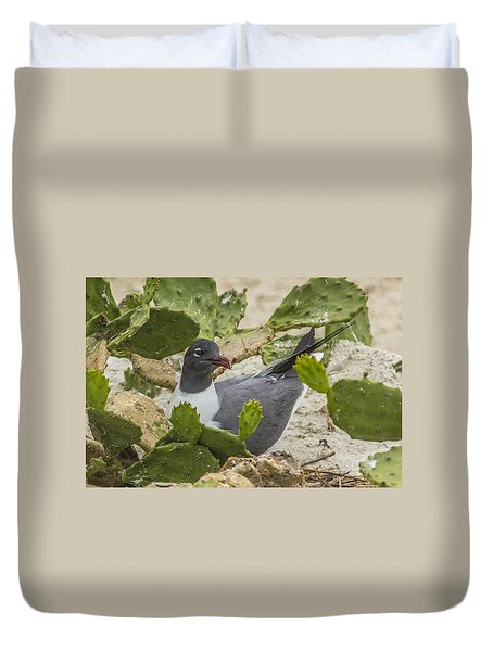 Duvet Cover featuring the photograph Nesting Laughing Gull by Paula Porterfield-Izzo