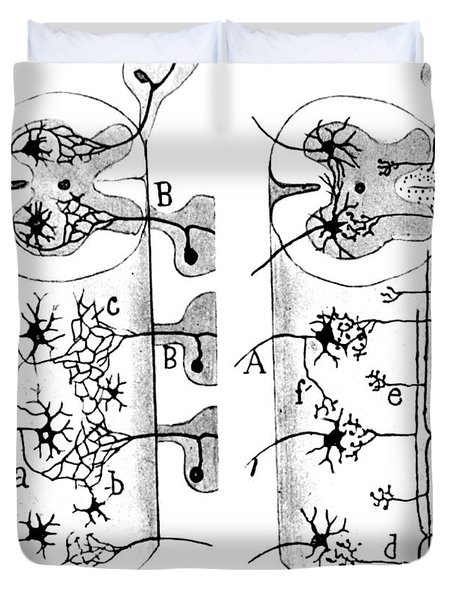 Neuroglia Cells Illustrated By Cajal Duvet Cover