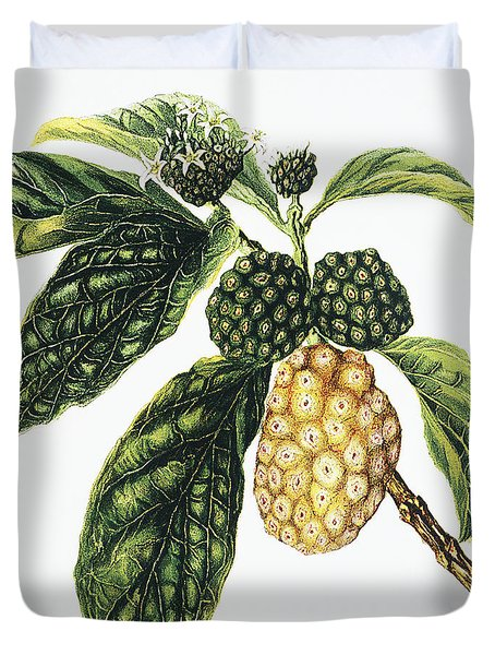 Noni Fruit Duvet Cover by Hawaiian Legacy Archive - Printscapes