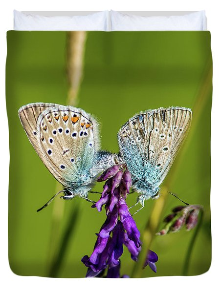 Northern Blue's Mating Duvet Cover