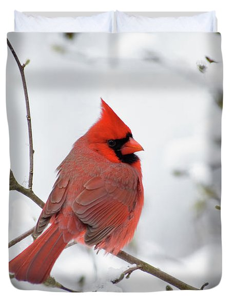 Northern Cardinal - D001540 Duvet Cover by Daniel Dempster