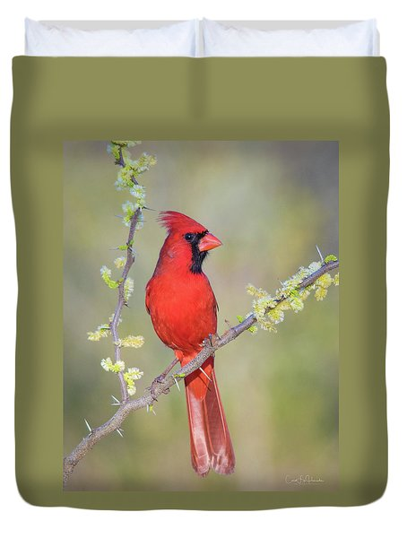Northern Cardinal Cfh175894 Duvet Cover