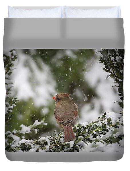 Northern Cardinal In Snow Duvet Cover