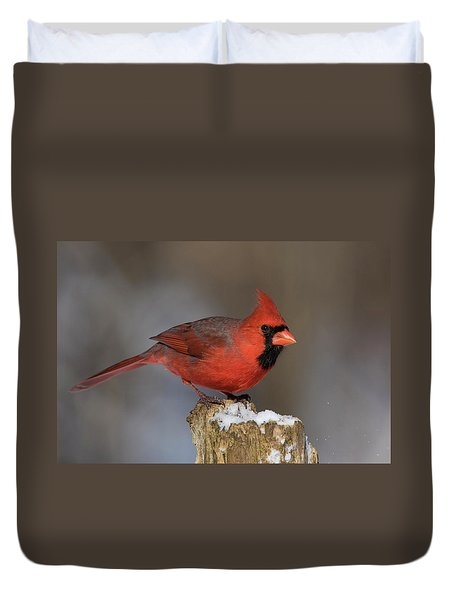 Duvet Cover featuring the photograph Northern Cardinal In Winter by Mircea Costina Photography