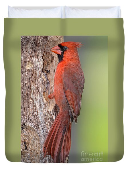 Northern Cardinal Male Duvet Cover by Bonnie Barry