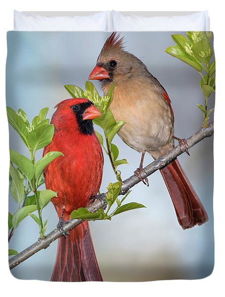Northern Cardinal Pair In Spring Duvet Cover