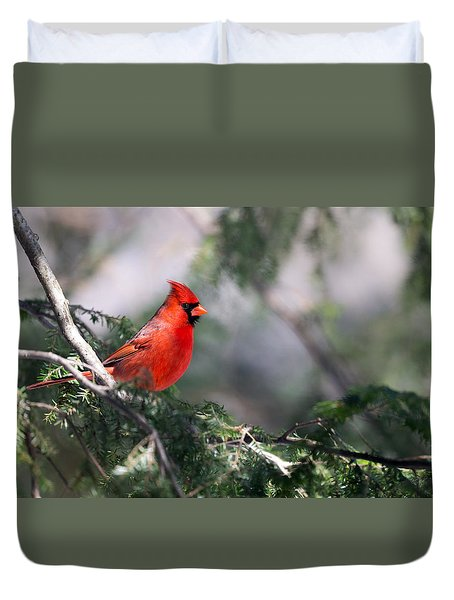 Northern Cardinal Red Duvet Cover