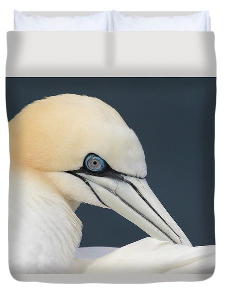 Northern Gannet At Troup Head - Scotland Duvet Cover
