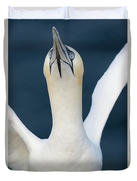 Northern Gannet Stretching Its Wings Duvet Cover