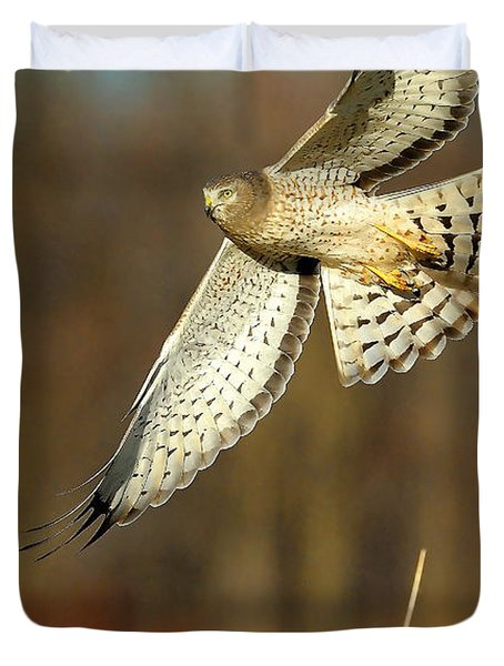 Northern Harrier Banking Duvet Cover