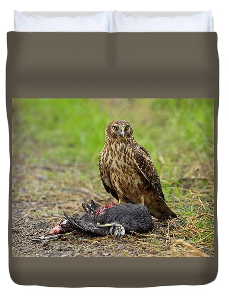 Northern Harrier Duvet Cover by Doug Herr