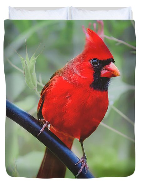 Northern Male Red Cardinal Bird Duvet Cover by Peggy Franz