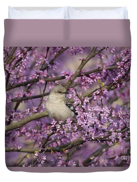 Northern Mockingbird In Blooming Redbud Tree Duvet Cover