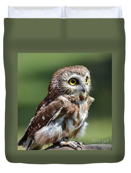 Northern Saw Whet Owl Duvet Cover by Amy Porter