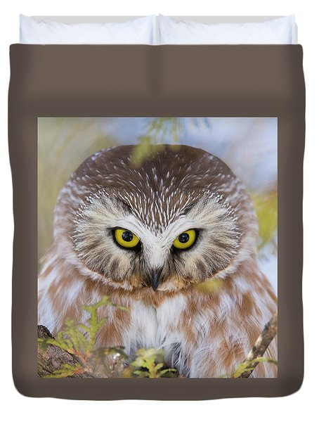 Duvet Cover featuring the photograph Northern Saw-whet Owl Portrait by Mircea Costina Photography