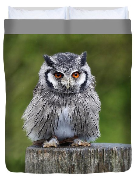 Northern White Faced Owl Duvet Cover