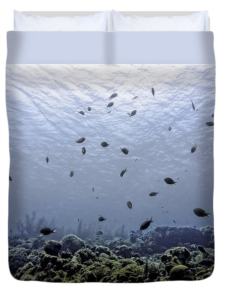 Ocean Light Duvet Cover by Perla Copernik