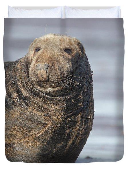 Old Atlantic Grey Seal On The Beach Duvet Cover