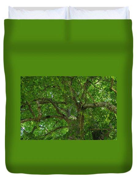 Old Linden Tree. Duvet Cover